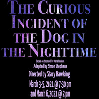 The Curious Incident of the Dog in the Nighttime in Austin
