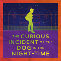 The Curious Incident of the Dog in the Night-Time in Seattle