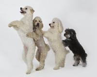 KidFEST: Olate Dogs in Long Island