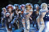 Cats in Broadway