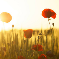 Summer Sunset Concert Featuring Instrumental Works by Handel, Zelenka, and Vivaldi in Baltimore