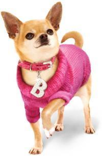 Legally Blonde: The Musical in Buffalo