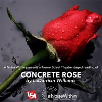 Concrete Rose in Los Angeles