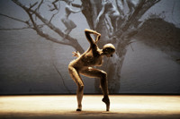 Harbourfront Centre presents Deborah Colker Dance Company?s Dog Without Feathers in Toronto