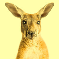 Australia Day in Australia - Sydney