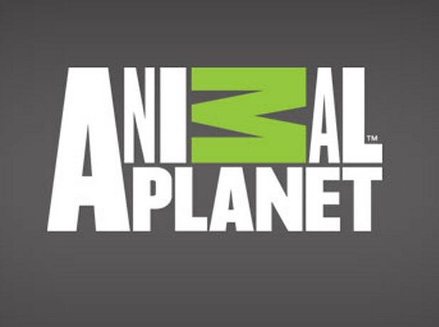 Animal Planet TV Logo
