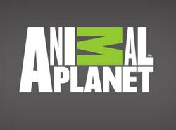 Animal Planet small logo