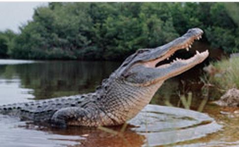 Gator Boys logo