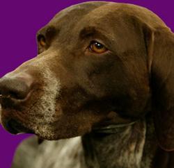 Westminster Kennel Club Dog Show small logo