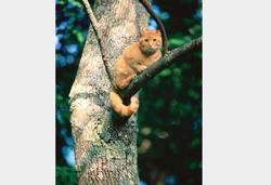 Treetop Cat Rescue small logo