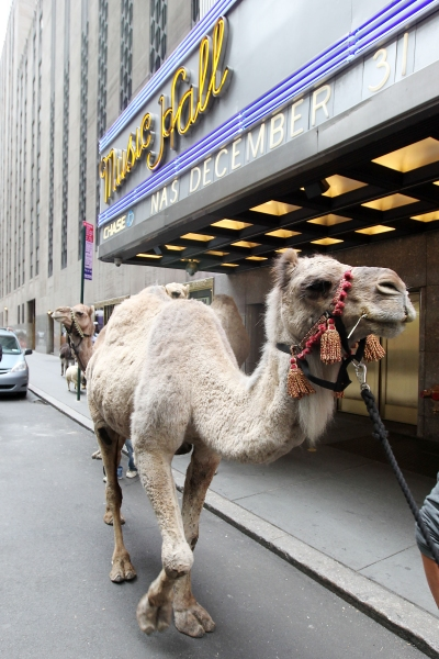 Photo Flash: Radio City Rockettes Welcome 'Living Nativity' to 2012 CHRISTMAS SPECTACULAR