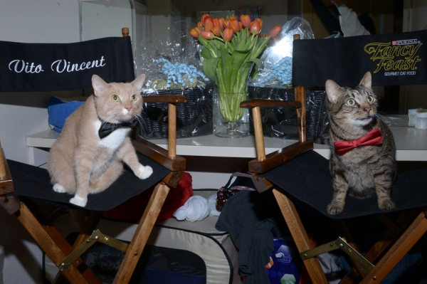 Photo Flash: Backstage with the BREAKFAST AT TIFFANY'S Kitties!
