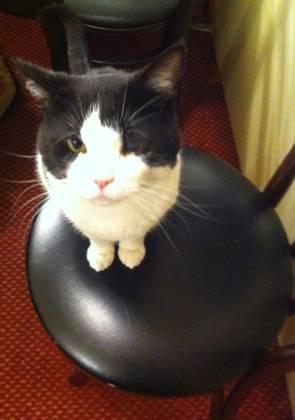 BWW Blog: Kate Cullen Roberts of BREAKFAST AT TIFFANY'S - CAT-ctors!