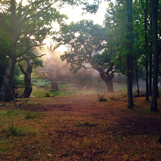 First Set Photos From INTO THE WOODS! Rapunzel's Castle, The Woods & More