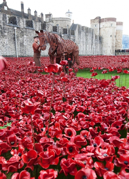 Joey, star of WAR HORSE, at the Tower of London
