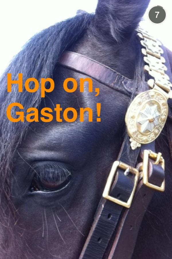 Meet Gaston's Horse, Magnifique! New Photos From Set Of BEAUTY AND THE BEAST Film