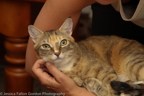 BWW Exclusive: TAILS OF BROADWAY- Meet Sierra Boggess' Broadway Kitties- Celie & Olivia!
