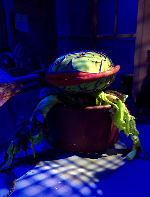 Photo Flash: Here Comes Audrey II! First Look at LITTLE SHOP OF HORRORS at Dante Hall Theater