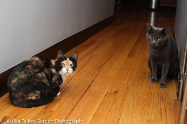 BWW Exclusive: TAILS OF BROADWAY- Meet Ariana DeBose's Feline Friends, Freddy and Izzy!