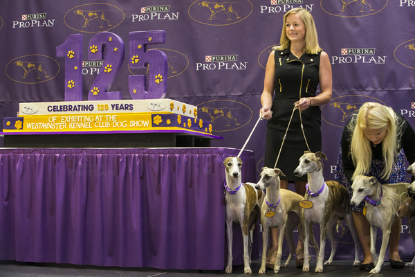 The Westminster Kennel Club Dog Show hosts a special event to celebrate the 125th anniversary of the Whippet breed being part of the competition in Chase Square at Madison Square Garden. In addition to more than a dozen whippets in attendance, Carlo's Bak
