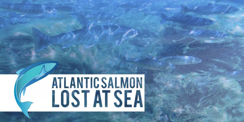 Poetry, Barney Rosset Documentary and Atlantic Salmon Highlight Irish Rep's 2017 Special Events
