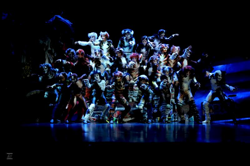 BWW Review: CATS at Ronacher