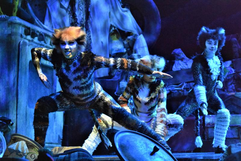 BWW Review: CATS, A Litter Ground of Spectacle, Mystery, Fun and Nostalgia