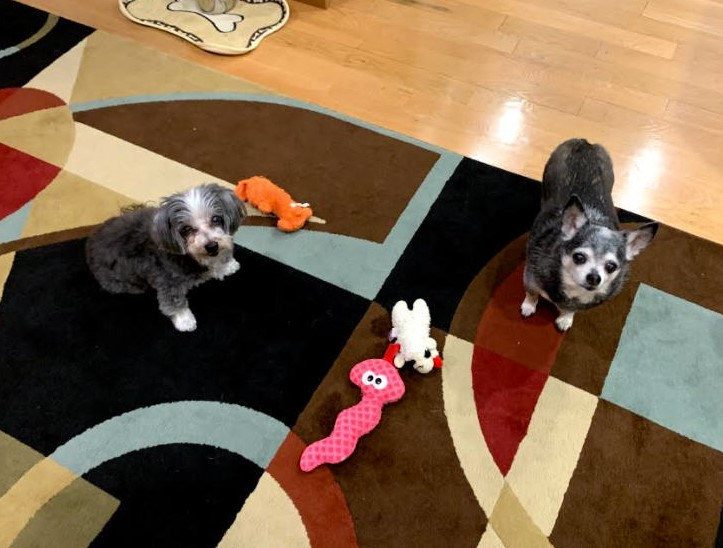 BWW Feature: Cabaret Critters