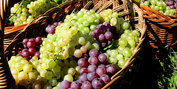 Mini Wine Tour-Experience Fine, Affordable Selections for the Holidays Photo
