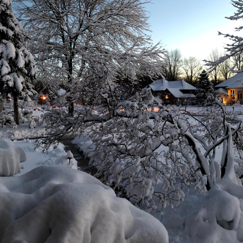 BWW Blog: Tackling Virtual, Remote Finals - Frosty's World #5