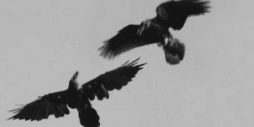 BWW Review: LA Opera's DIGITAL SHORT DEATH Now Streaming Photo