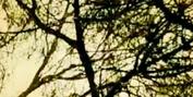 Nanook Will Showcase 'Primavera 2' EP at Teatro das Figuras Next Month Photo