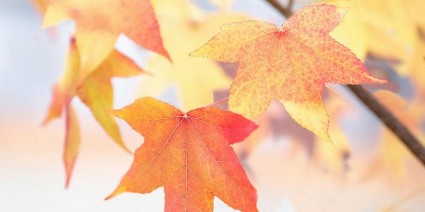 Student Blog: My October Playlist Photo