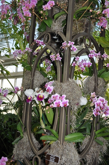 Photo Coverage: THE Orchid Show: On Broadway